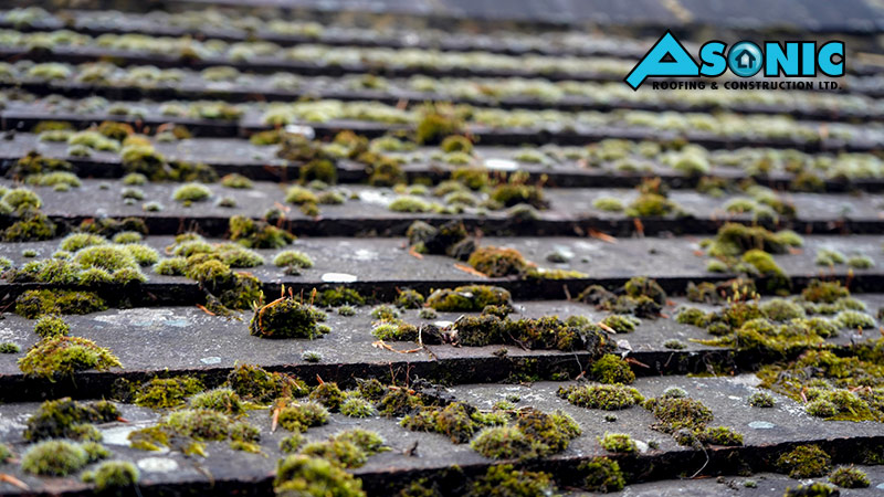 How To Remove Algae From Your Roofing